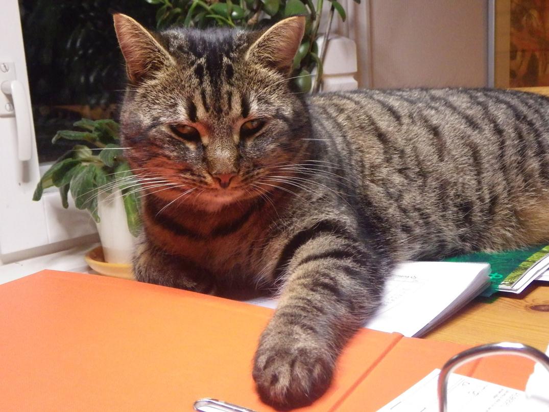 """Tassu-kissa toimii firman taloushallinnon """"ylitarkastajana"""""""